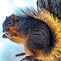 Peanut Breakfast by Optical Playground By MP Ray
