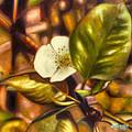 Pear Blossom by Melissa Herrin