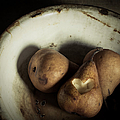 Pear Love by Amy Weiss
