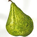 Pear Study#3 by Toni Willey
