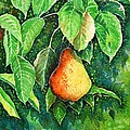 Pear by Zaira Dzhaubaeva