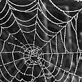 Pearl Web by Pauline Flesseman