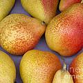 Pears by Ann Horn