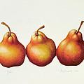 Pears by Annabel Barrett