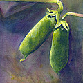 Peas On The Vine by Phyllis Howard