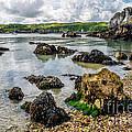 Pebble Bay by Adrian Evans