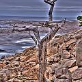 Pebble Beach 4 by Richard J Cassato
