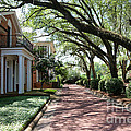 Pebble Hill Plantation Walkway by Carol Groenen