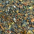 Pebbled Shore At Ullapool by Joan-Violet Stretch