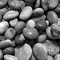 Pebbles Chesil Uk  by Julia Gavin
