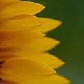 Petals  by Jeffery L Bowers