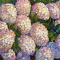 Peegee Hydrangeas by Janet Zeh