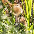 Peek-a-boo by Jim Lepard