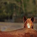 Peek A Boo by Kevan Garecki