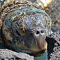 Peek-a-boo Turtle by Amanda Eberly-Kudamik