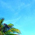 Peekaboo Palm - Tropical Art By Sharon Cummings by Sharon Cummings