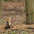 Peeking From The Fox Hole by Everet Regal