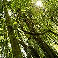 Peeking In Costa Rica Rain Forest by Thomas Levine