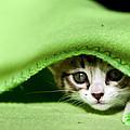 Peeking by Jorge Maia