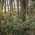 Peeking Through The Trees by Jane Luxton