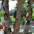 Peeling Bark by Barbara McDevitt