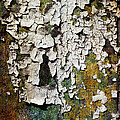 Peeling Paint by David Lichtneker