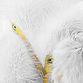 Peering Thru Feathers by Dawn Currie