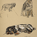 Pekinese, Chow And Spaniel, 1930 by Cecil Charles Windsor Aldin