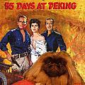 Pekingese Art - 55 Days In Peking Movie Poster by Sandra Sij