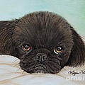 Buddy The Pekingese by Megan Cohen