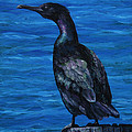 Pelagic Cormorant by Crista Forest