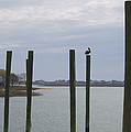 Pelican And Pilings On The Inlet by MM Anderson