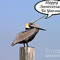 Pelican Anniversary Card by Al Powell Photography USA