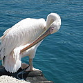 Pelican At Mykonos by A K Dayton