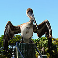 Pelican At Rest by Lonnie Wooten