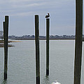 Pelican Atop A Piling In Murrells Inlet by MM Anderson