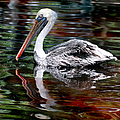Pelican Bay by Donna Proctor