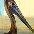 Pelican Bill by Karen Wiles