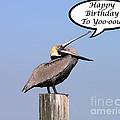 Pelican Birthday Card by Al Powell Photography USA