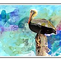 Pelican Colours by Alice Gipson