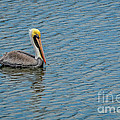 Pelican Drifting On Rippled Water by Debra Martz