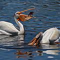 Pelican Fishing Buddies by Kathleen Bishop