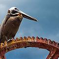 Pelican In St. Croix by Craig Bowman
