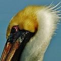 Pelican Mohawk 1/13 by Mark Lemmon