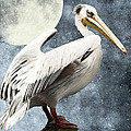 Pelican Night by Angela Doelling AD DESIGN Photo and PhotoArt