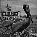Pelican On Pier by Moore Design