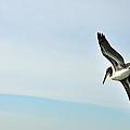 Pelican On Sanibel by Deborah Good