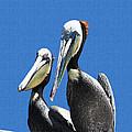 Pelican Pair At Oceanside Pier by Tom Janca