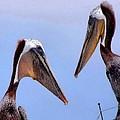 Pelican Pair by Phil Huettner