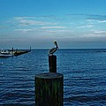 Pelican Pamlico Sound Hatteras 2/11 by Mark Lemmon
